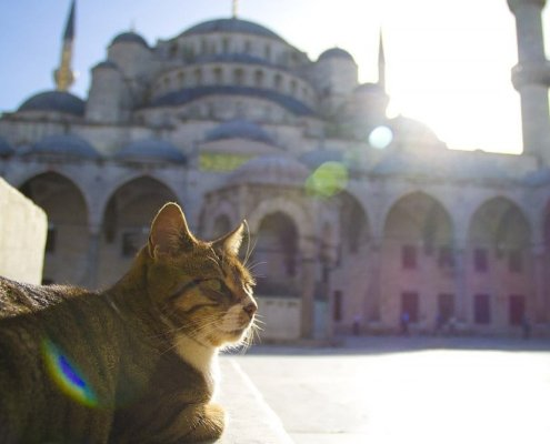 international travel photographer